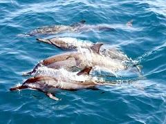 宜蘭龜山島賞鯨船務中心